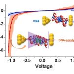 DNA diode graph