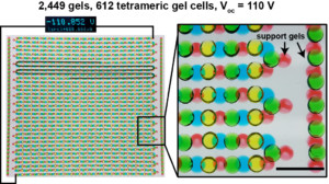 Thousands of gels connected in sequence generates 110 volts. Scale bar = 1 cm.